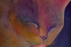 35-cats-lick