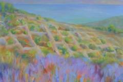 Summer Lavender in Flower